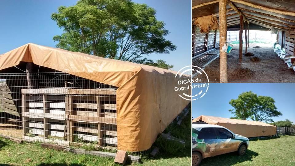 8472c726d Abrigo para os animais e redução na mortalidade de cordeiros e ...